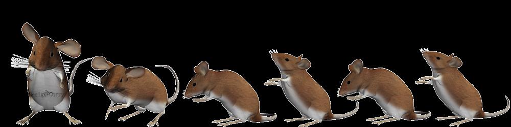 alle-muizen-samen