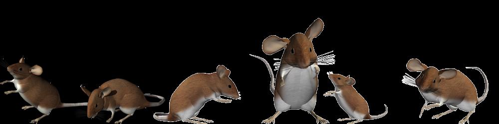 muizensheriff-deel-2-muizen-liegen