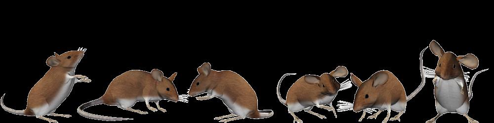 muizensheriff-deel-2-muizen