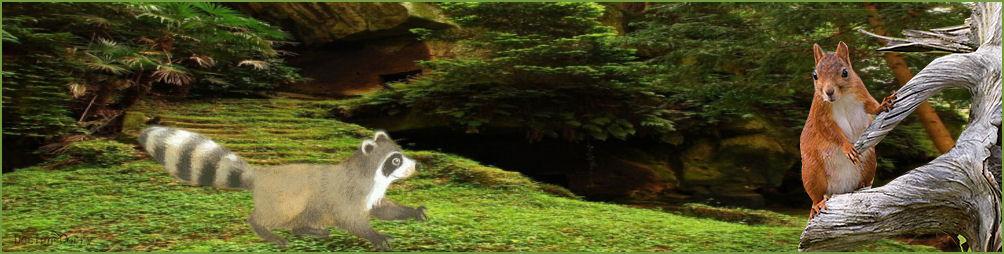 wiebel-wasbeer-eekhhorn