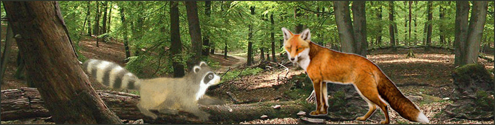 wiebel-wasbeer-samen-in-bos