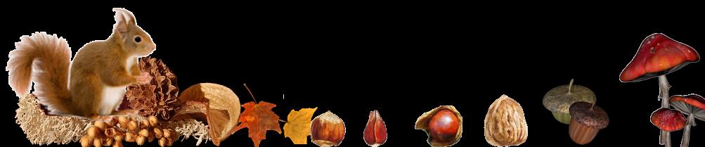 eekje-eekhoorn-met-noten