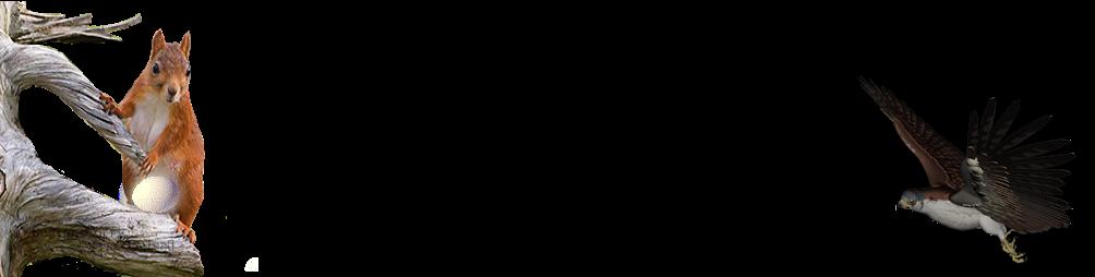 eekje-vogel