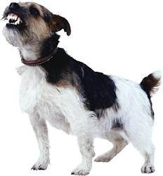 rosja-hond