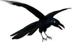 raaf-blauwoog