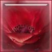 knop rood blog